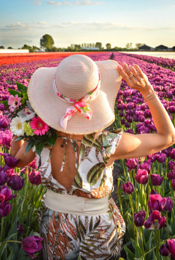 Quando in Olanda fioriscono i tulipani ?